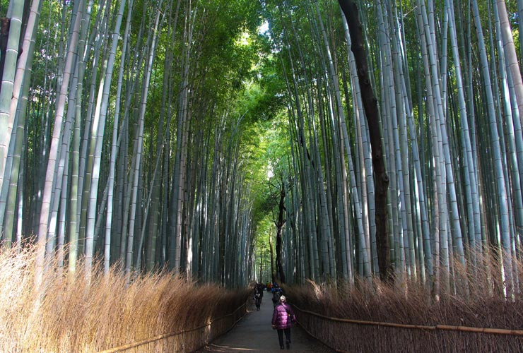 Uncover Bamboo Forests