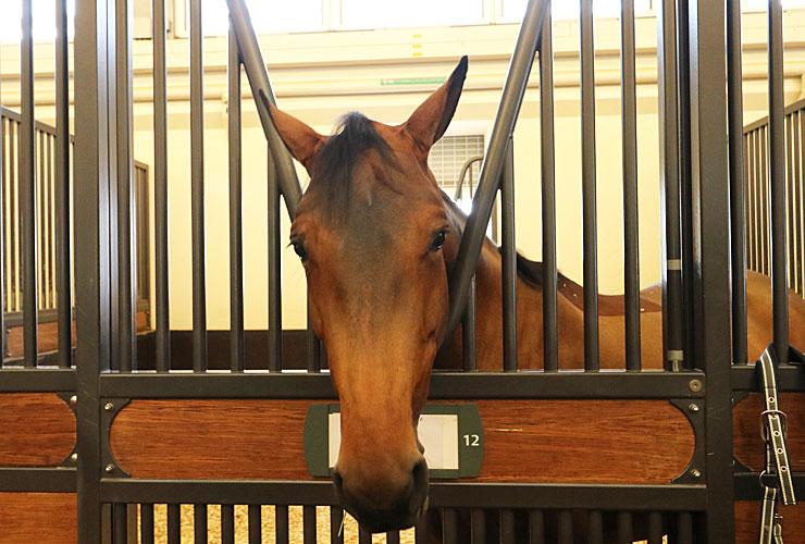 Arabian Horses Al Shaqab
