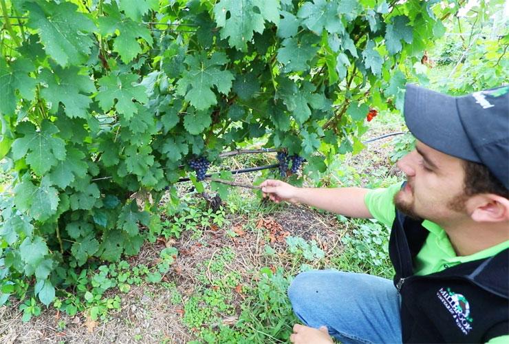 Millbrook Vineyard