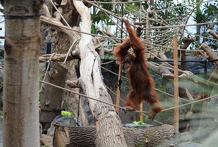 Hamburg Zoo